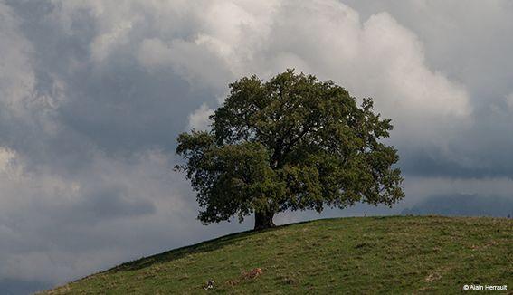 Participez à l'inventaire des arbres remarquables dans l'agglomération grenobloise ! Mes loisirs - ECOCITOYEN GRENOBLE