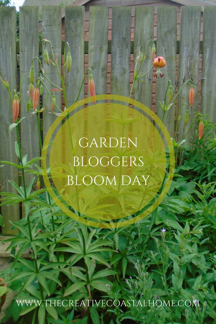 Join the monthly Garden Bloggers Bloom Day where gardeners all over the World show what's blooming in their garden