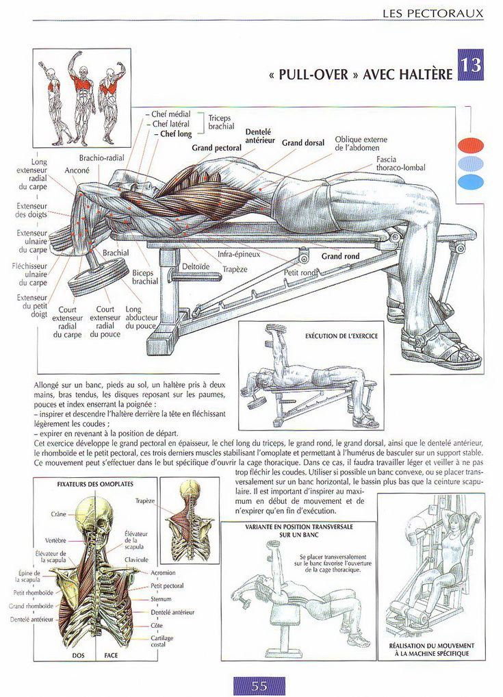 guide de musculation: BEST chest workouts