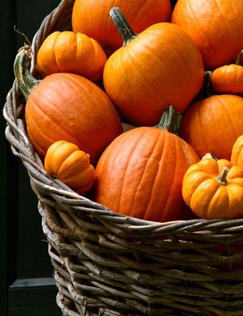 Country Fall Basket of Pumpkins
