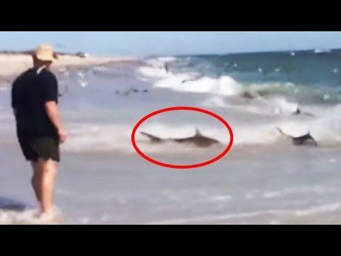 Rare shark feeding caught on video close to shore | Rare