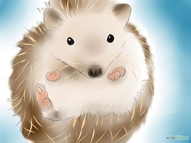 """The """"Need to Know"""" before buying a hedgehog."""