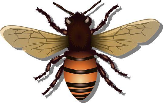 Μελισσών, Μέλισσα, Έντομο, Fly