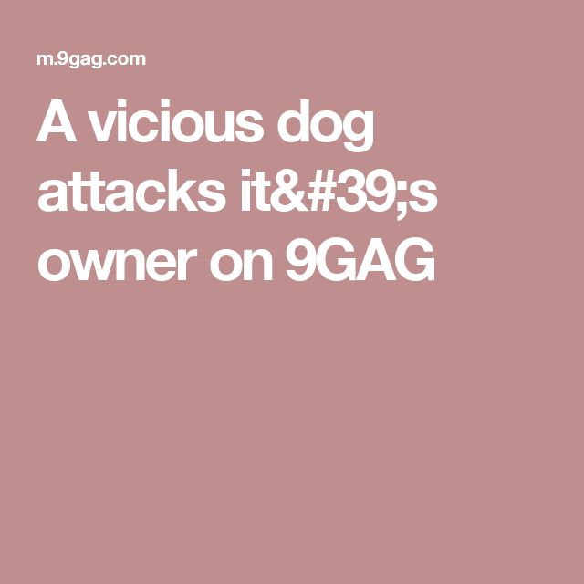 A vicious dog attacks it's owner on 9GAG