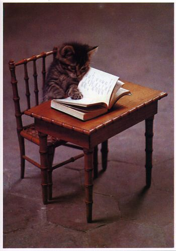 Kitty Lit ... Cat-a-logues helps to find the Purrrfect books :D