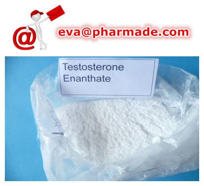 Testosterone Enanthate Anabolic Steroid Powder Bodybuilding Hormones  1,  Manufacturer :Pharmade  2,  Alias: Test en,Test enanthate,Testosterone enthanoate,Primoteston  3,  Purity:98%min  4,  Character: White crystalline powder.  5,  Melting point: 34-39℃  6,  Drug Class: Injectable Anabolic Androgenic Steroid  7,  Storage: Keep at room temperature between 68-77 degrees F (20-25 degrees C) out from light.