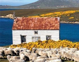 Islas Malvinas. Argentina.