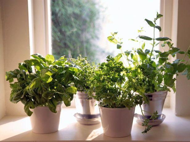 How to start an indoor herb garden...