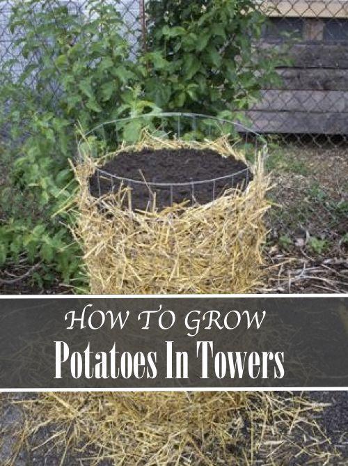 Grow 100 lbs of Potatoes in 4 Square Feet Lifehacker