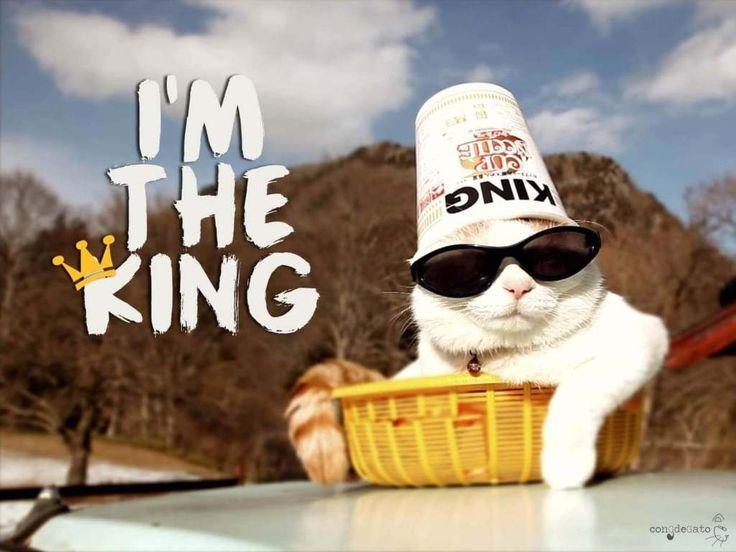 gato rey de la casa