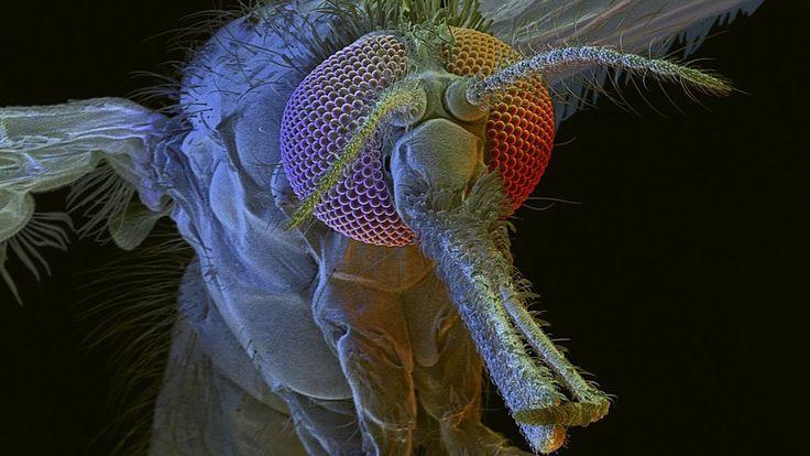 Malaria resistance 'unable to spread'
