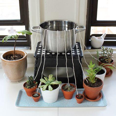 Astucieux arrosage automatique plantes pinterest for Arrosage automatique interieur