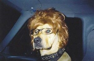 Dog with Wig and Glasses