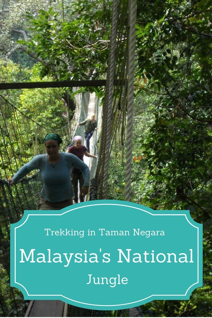 A Blast from the Past travel blog about trekking Taman Negara in Malaysia and skinny dipping in Cherating back in 2005, oh how blogging has changed