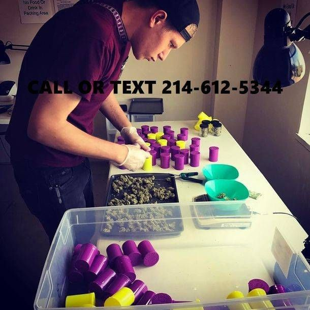 Buy Marijuana Online | Buy weed Online | Weed for sale | CBD Oil for sale | Cannabis Oils | Medical Marijuana | Buy Hashish | Marijuana Edibles | Hemp Oil | Wax for sale | Buy Hash | Tinctures | Cannabis Concentrates | Shatter for sale hit me up on Whatsapp ... +18323018623 /   WEB : www.pillsandkushonline.webs.com email .. bestmedstore@gmail.com … KIK ID … bestmedics Youtube : https://youtu.be/scmwc8OmnnE PLease support by subscribing to my channeel and also like and comment.