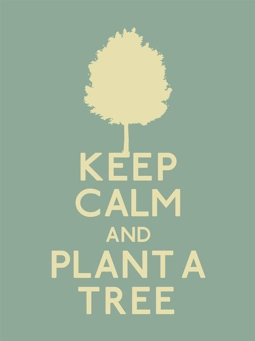Keep Calm and Plant a Tree Always a Great Idea = Plant a Tree. And Then Keep Calm and Help Save Our Planet Keep Calm Posters, Keep Calm Quotes, Video Blog, Keep Calm Signs, Save Our Earth, Arbour Day, Earth Day, Planet Earth, Mother Earth