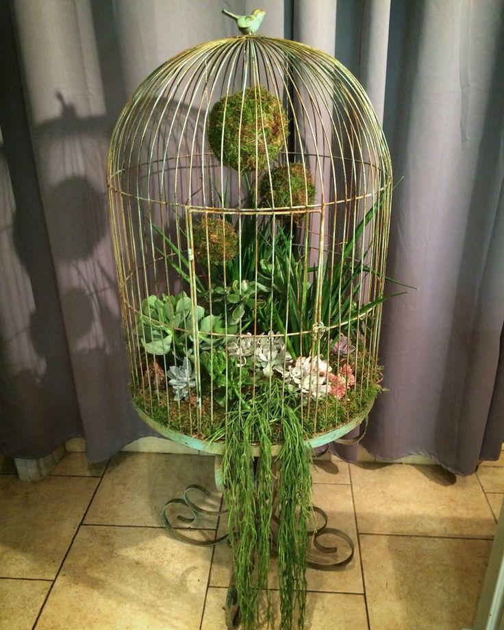 Plantes en cage #AudaceFloraleChantilly