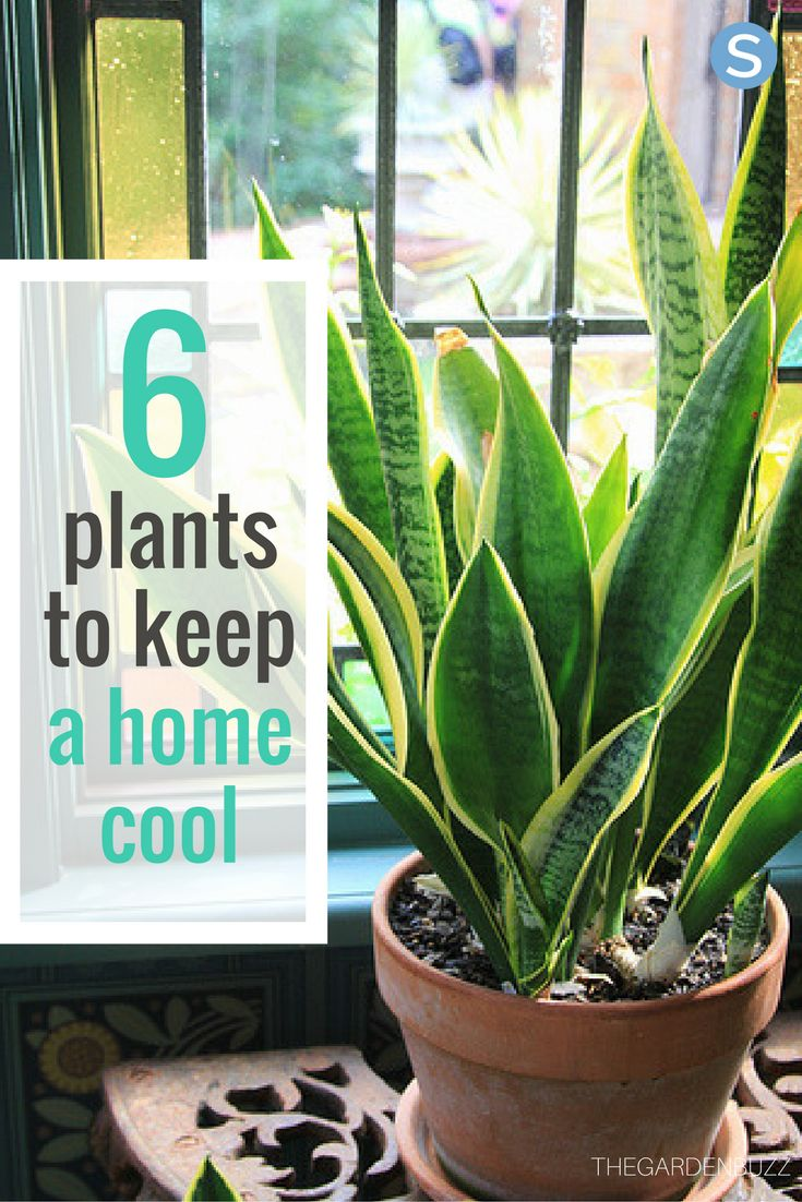 n the warmer months, it can be tempting to blast the air conditioning in an effort to stay cool, but there is a much cheaper, more environmentally-friendly way to keep the temperature down in your house: plants.