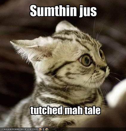 hahahahaha: Funny Kitty, Lol Cat, Laughing So Hard, Funny Pictures, Funny Cat, The Faces, Funny Kittens, Funny Stuff, So Funny