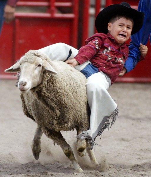 Rodeo In Morley Alberta In Kanada Reuters Bringin The