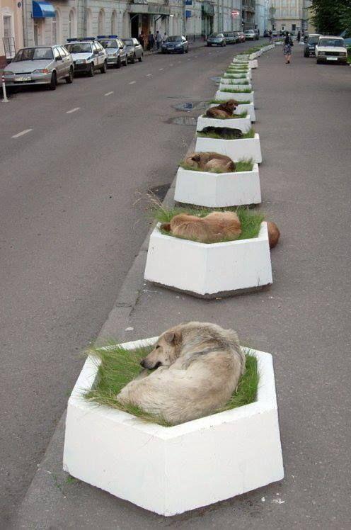 sokak köpekleri için