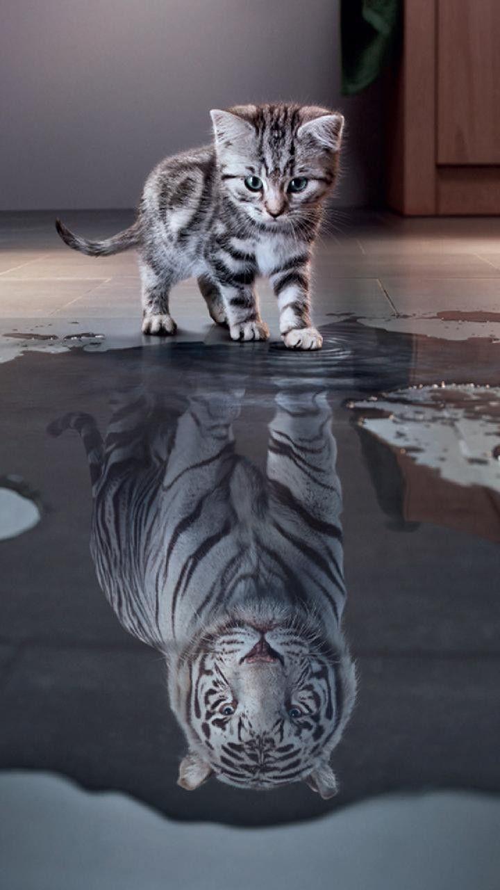 Zedge Cute Cats Wallpapers Little Cat Tiger Walpaper Cute Cat Wallpaper Kitten