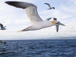 Top 10 Fakta Menarik Tentang Migrasi Burung  Hiburan - December 26 2016 at 01:11PM