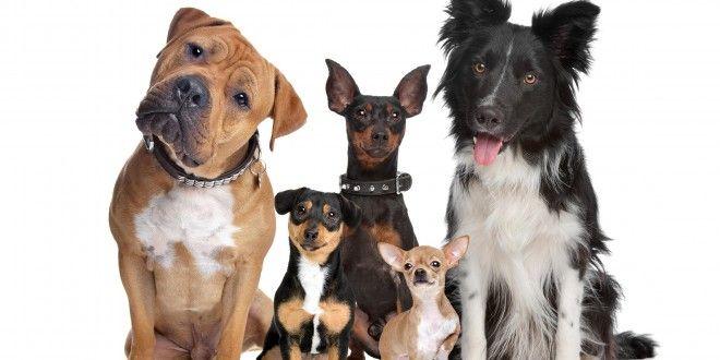 Assurance pour chien et mutuelle pour chien