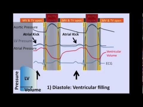 The Cardiac Cycle   -- what I watch these days...
