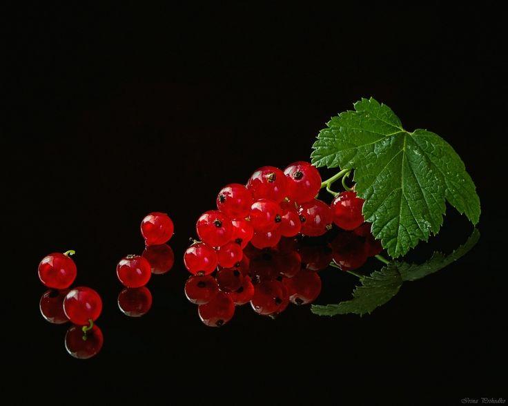 Красное на черном | Photographer Ирина Приходько | foto.by фото.бай