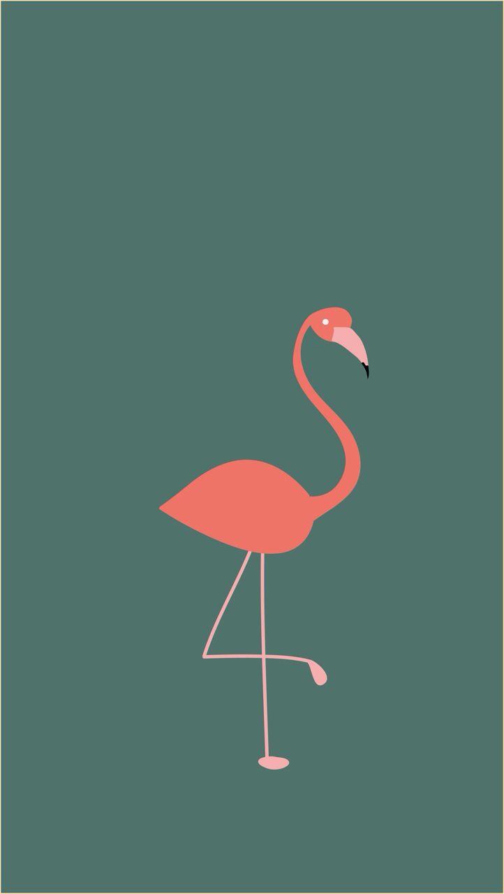 Background flamingo flamingos iphone wallpaper wallpaper - Flamenco
