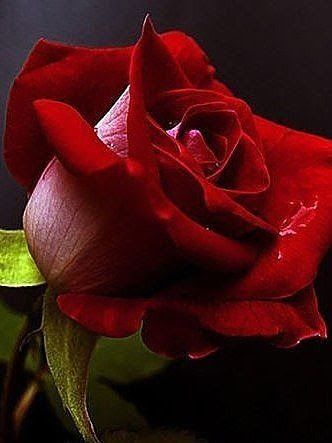 Beautiful flower - Comunidade - Google+