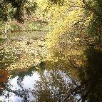 根池。豊田市羽布町鬼の平1-173 http://www.karen-shimoyama.jp/sightseeing.html