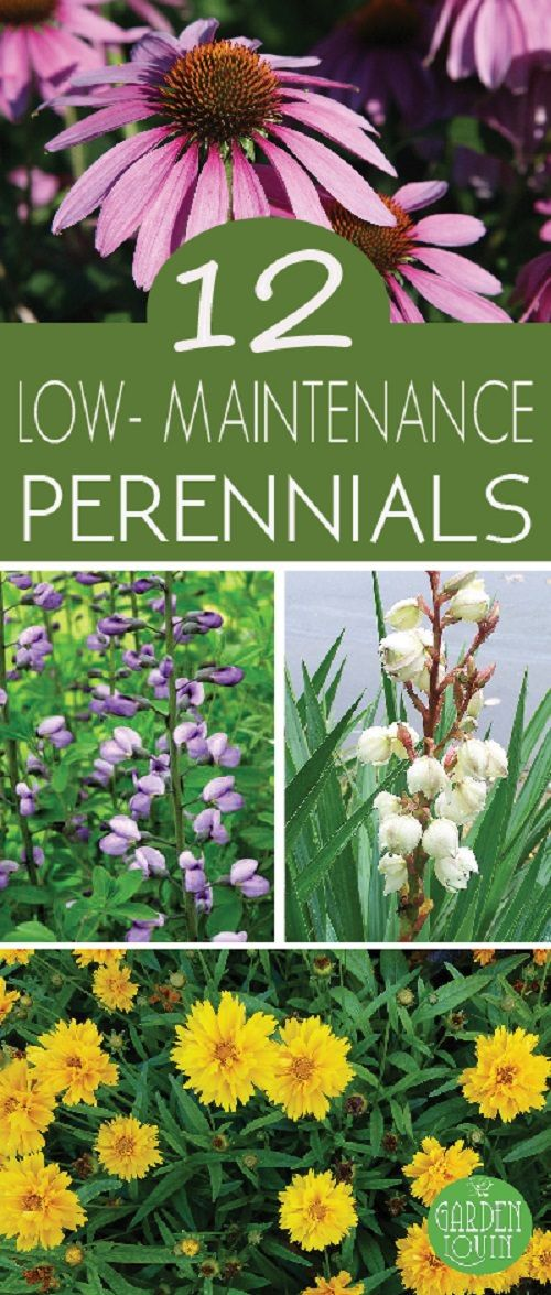 Beautiful and reliable plants don't have to be a gamble. Check out these low maintenance perennials to add beauty to your backyard without much efforts!