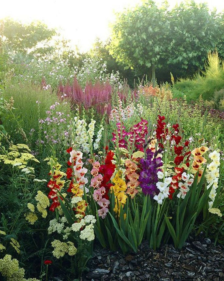 Growing Gladiolus In The Garden In 2020 Flower Garden Design Lily Plants Flower Garden