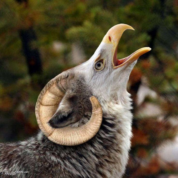 Howler Chimaera   Animal mashups, Fake animals