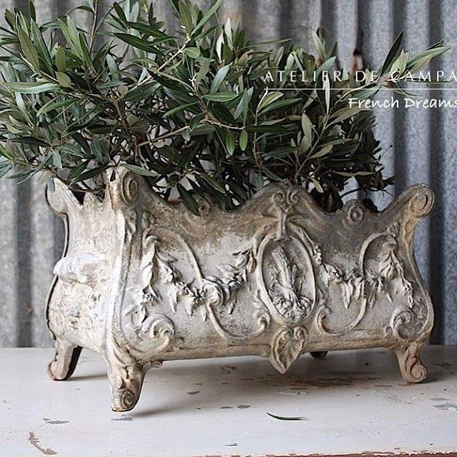 Great patina on this white-grey cast iron jardiniere. Coming in spring container. #jardiniere #planter #gardening #frenchcountry #antiques #vintage #brocante #atelierdecampagne