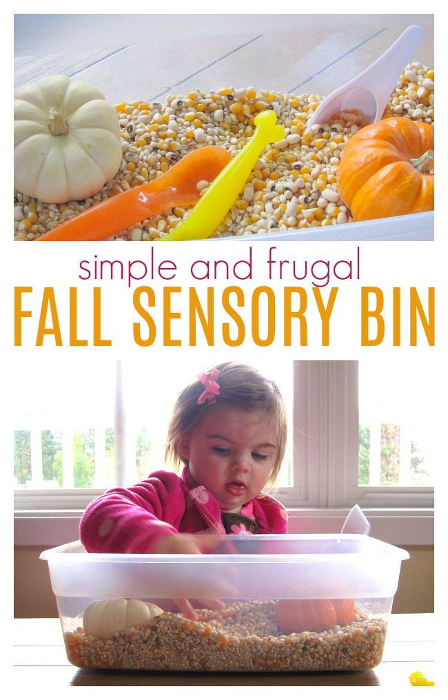 This easy fall sensory bin is fun and cheap! Budget friendly fall sensory bin for preschool and toddlers to explore with their senses.