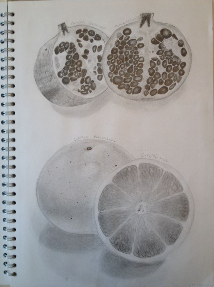 First Hand Observational Drawings of Fruit - pomegranate and grapefruit {by Phoebe Barker}