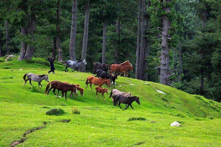 Suddan Gali, Azad Kashmir, Pakistan