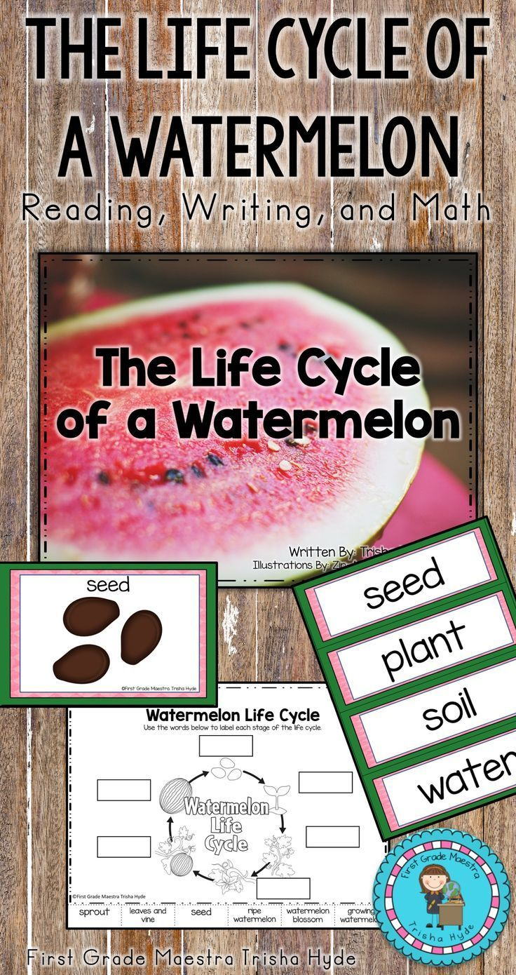 This Is A Life Cycle Of A Watermelon Mini Unit Included In This Unit Is A Full Size Book Suitable For A Read Life Cycles Cloze Activity Read Aloud Activities [ 1390 x 736 Pixel ]