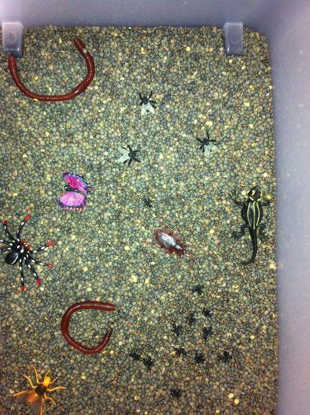bac sensoriel : chercher / trouver  les petites bêtes