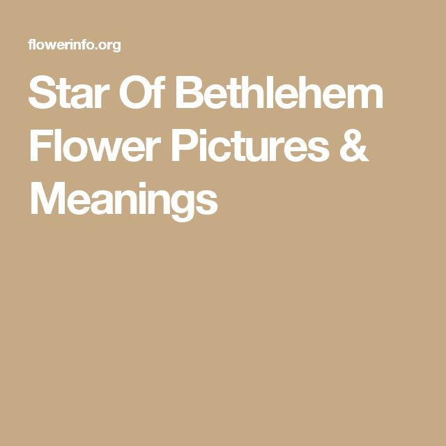 Star Of Bethlehem Flower Pictures & Meanings