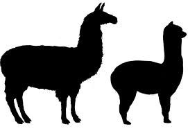 Alpacas, llamas, guinea pigs domesticated by around 4000 BC.
