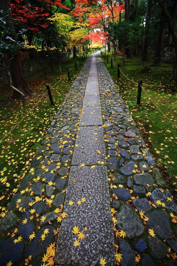 京都鹿王院(ろくおういん)の参道の鮮やかな散り紅葉