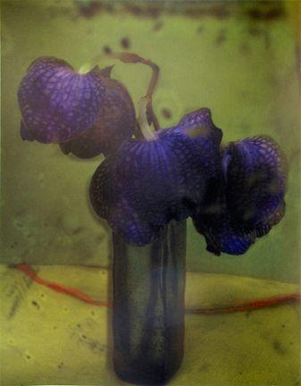 Las orquídeas - Sarah Moon, 2010