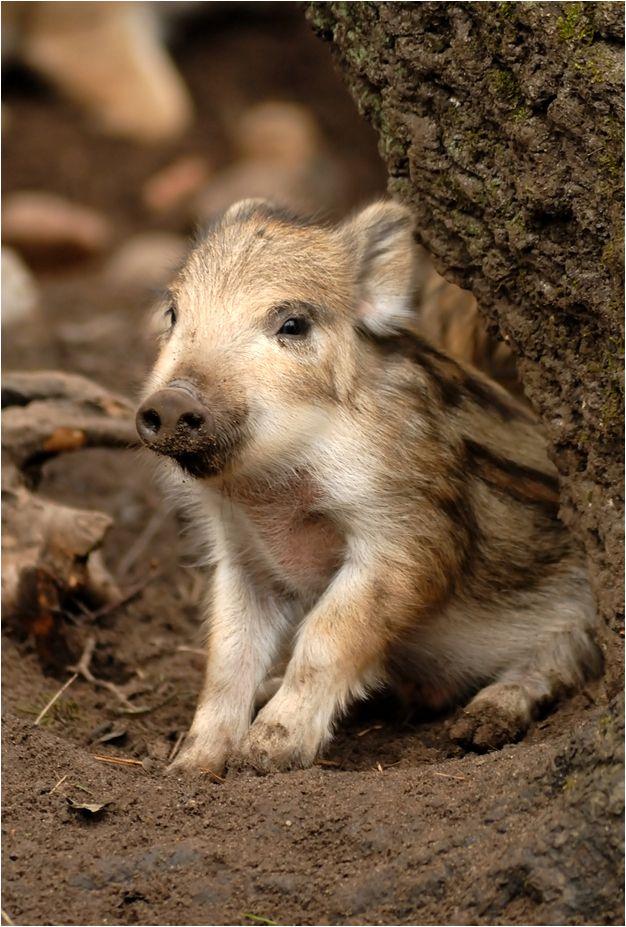 (via Wild Baby by ~x-crossroad on deviantART) - animals-of-the-world.tumblr.com