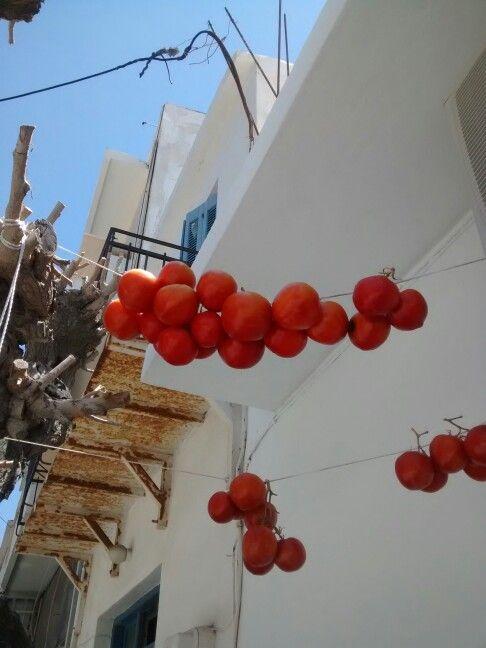 Sun drying tomatoes Mirtos