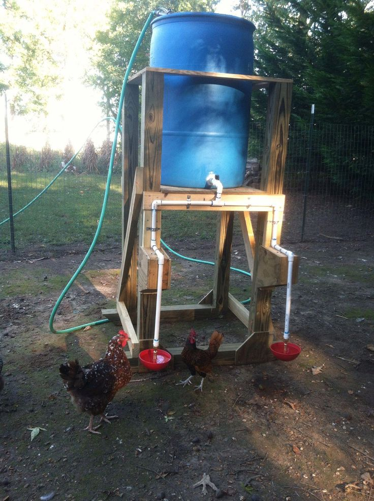 Automatic chicken waterer my hubs made for me!!  :) #chickenrun