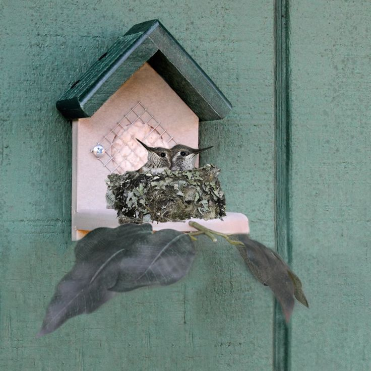Hummingbird Nesting House   Give hummingbirds a sturdy place to build their nest